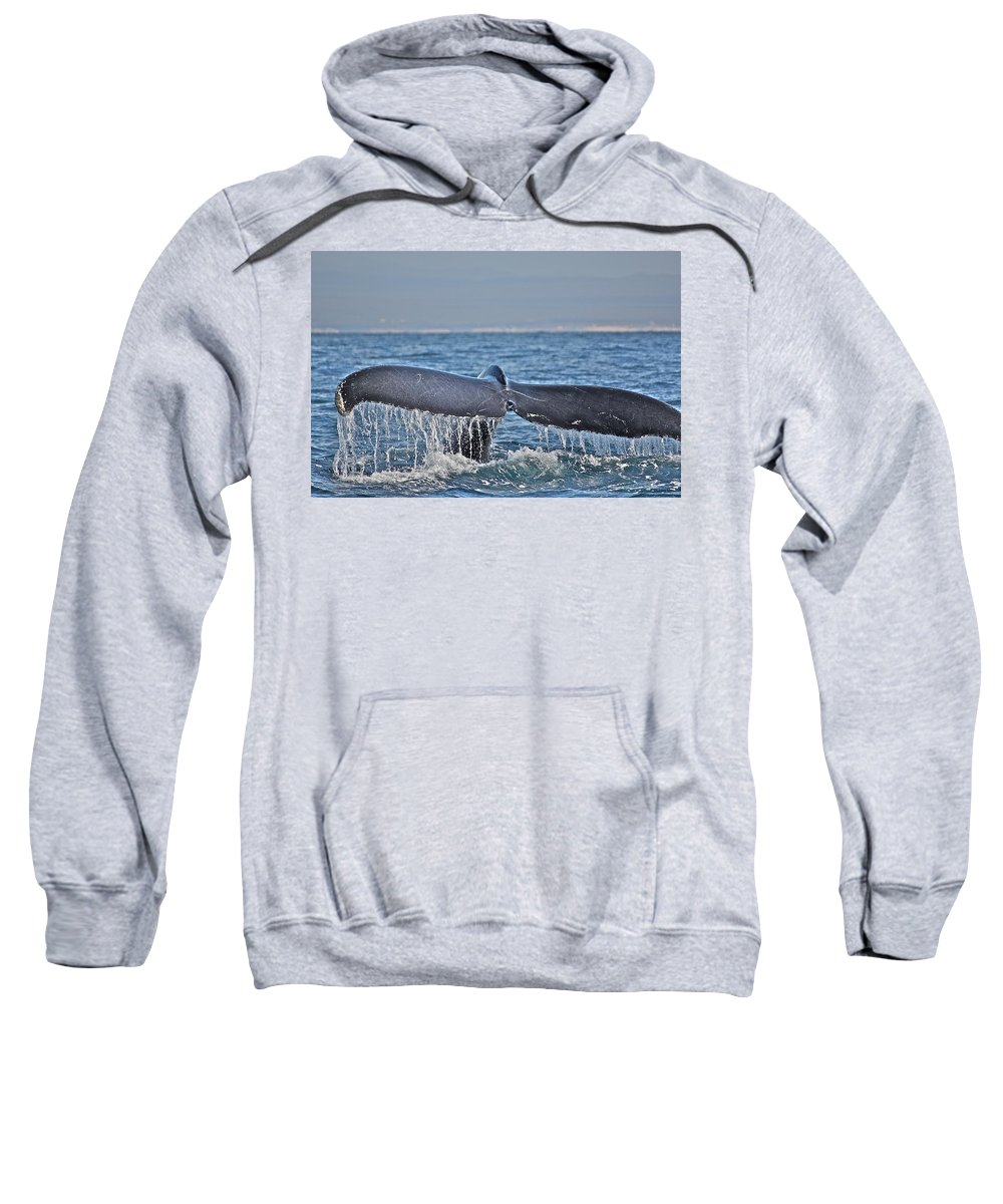 Whale Sweatshirt featuring the photograph A Whale Of A Tale by Diana Hatcher
