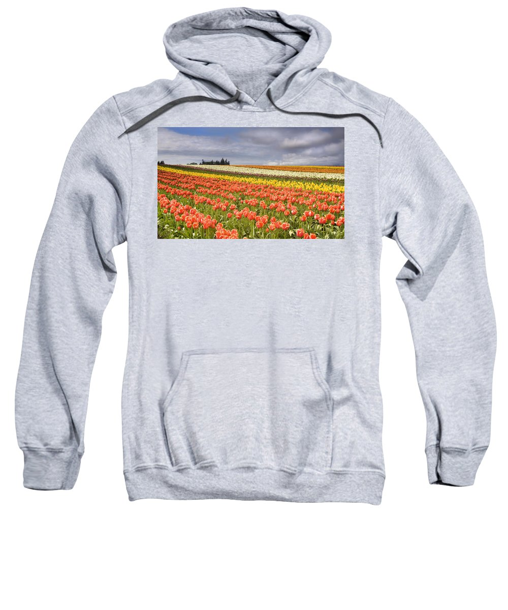 Tulips Sweatshirt featuring the photograph Across Colorful Fields by Mike Dawson