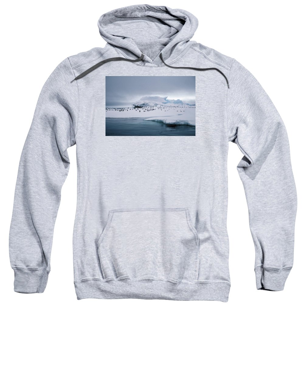 Panguin Sweatshirt featuring the photograph Adelie Penguins On Iceberg Weddell Sea by Brian Lockett