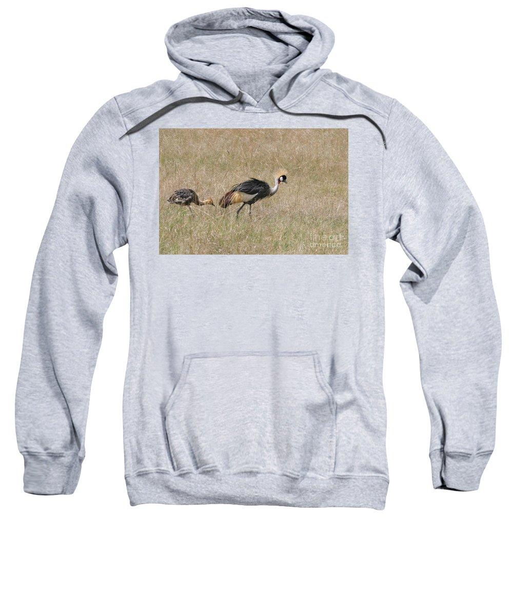 African Gray Crown Crane Sweatshirt featuring the photograph African Grey Crown Crane by Joseph G Holland