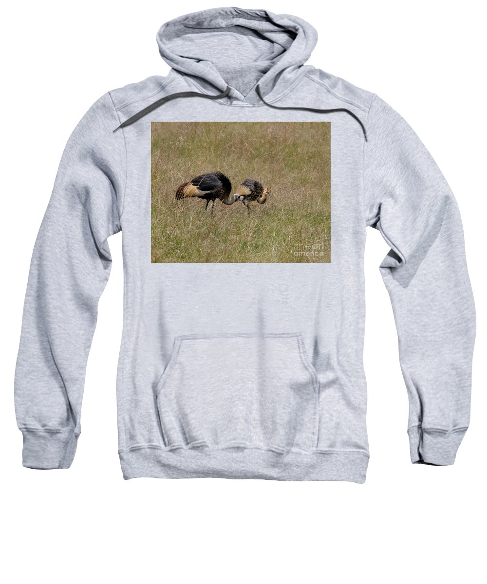 Grey Crown Crane Sweatshirt featuring the photograph African Grey Crowned Crane With Chick by Joseph G Holland