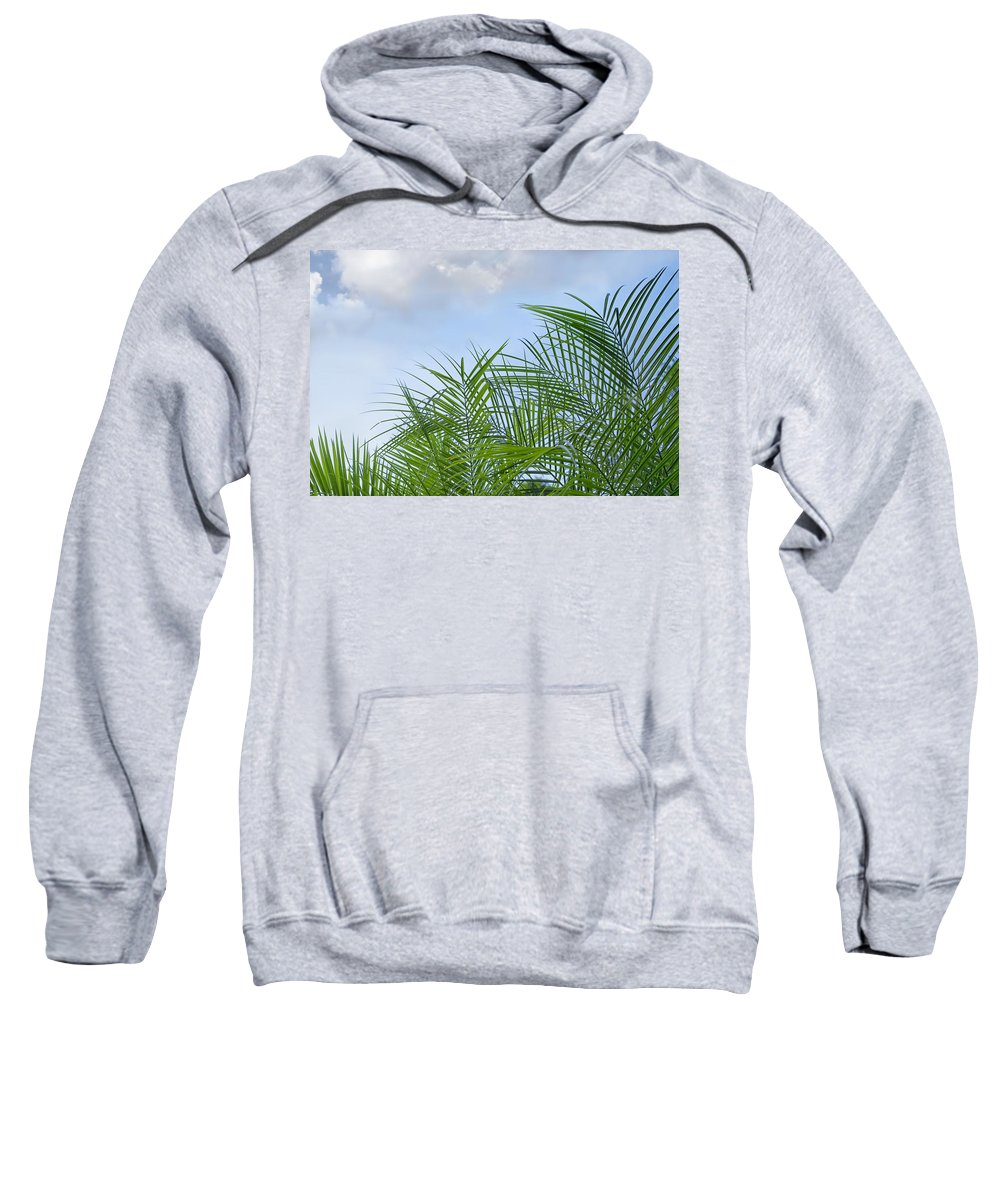 Palm Sweatshirt featuring the photograph Against The Sky by Louise Hill
