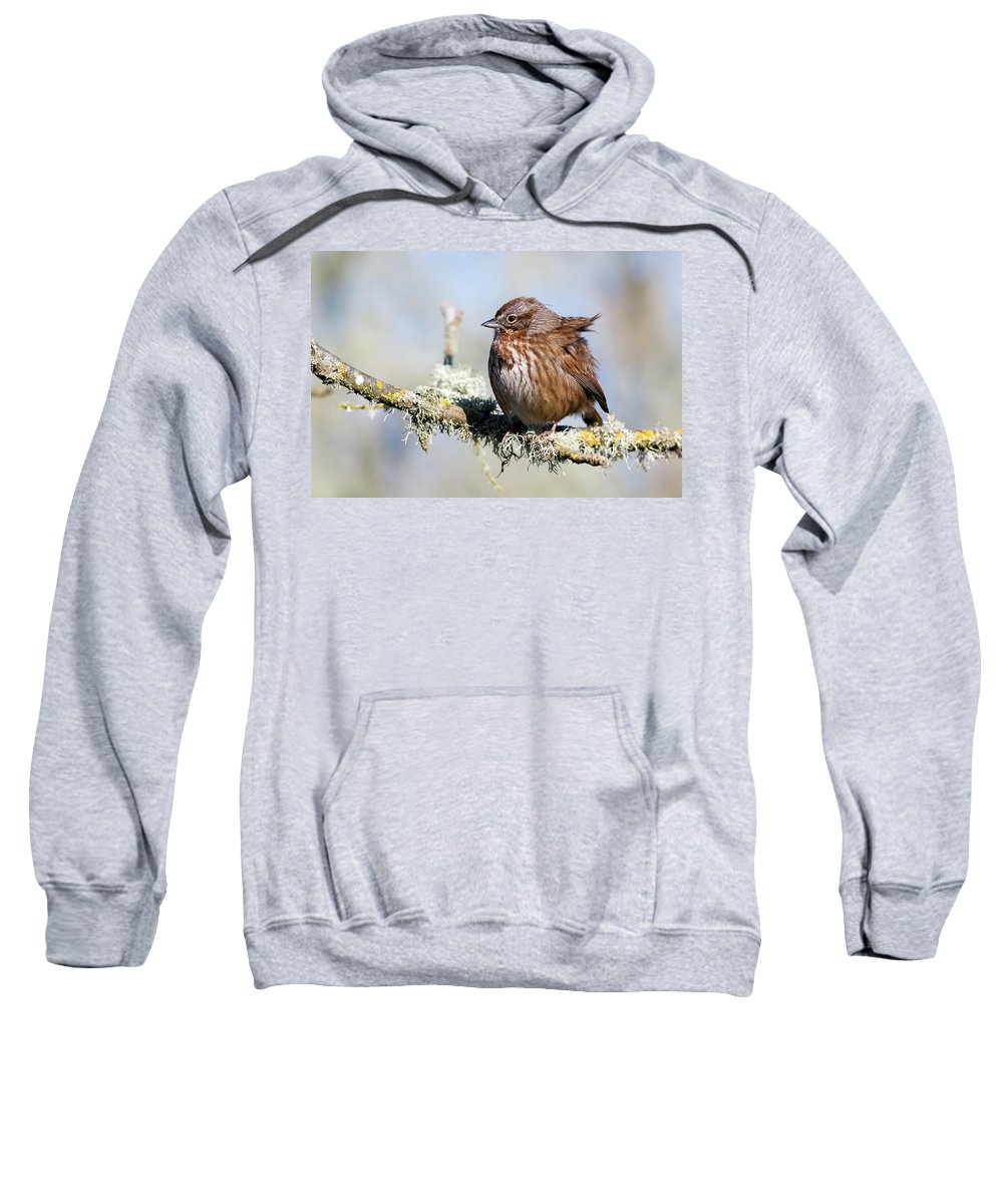 Song Sparrow Sweatshirt featuring the photograph Against The Wind by Randall Ingalls