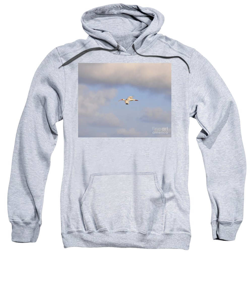 Ibis Sweatshirt featuring the photograph Airborne Ibis by Al Powell Photography USA