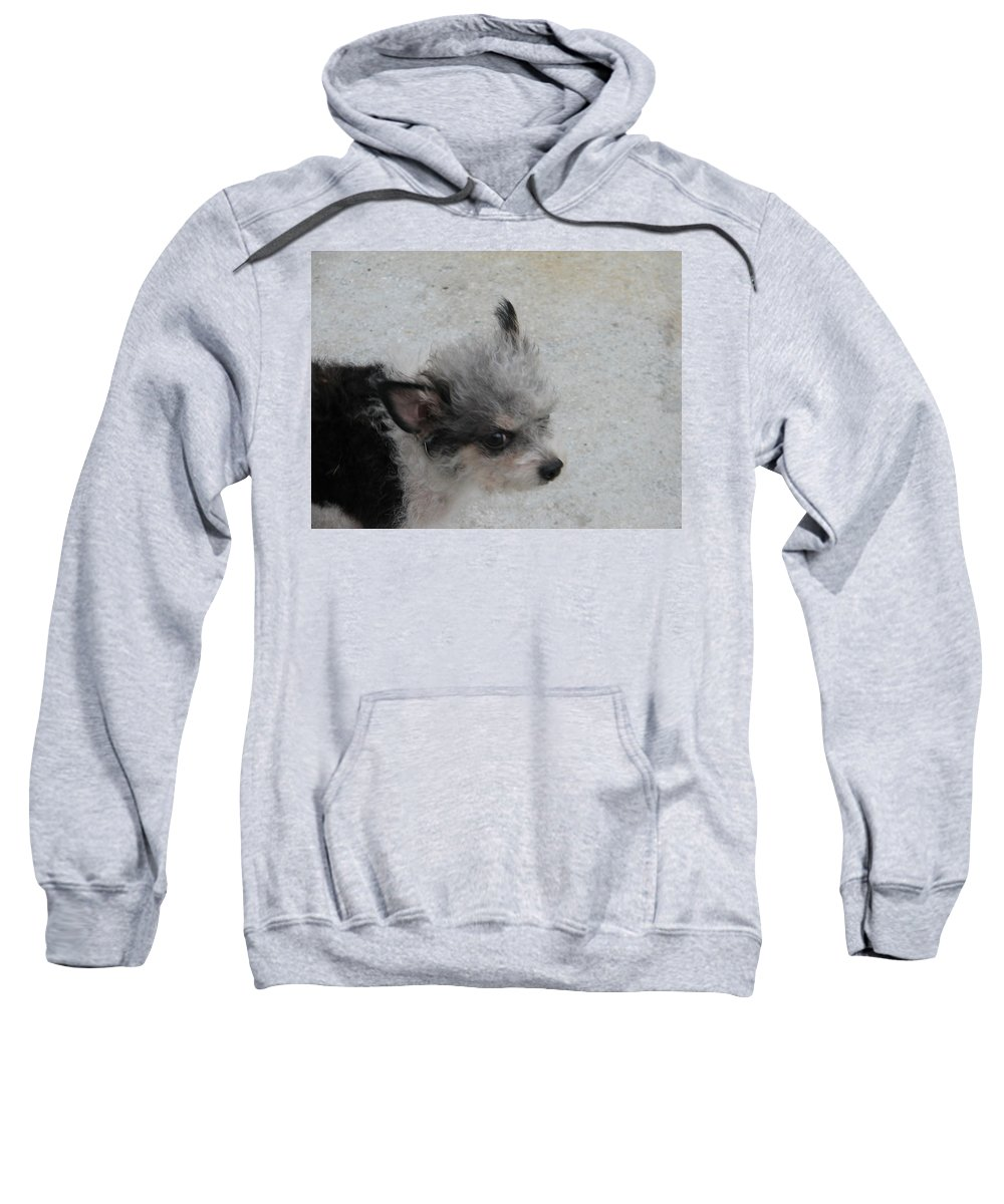 Puppy Sweatshirt featuring the photograph Airport Pup by Kelly Mezzapelle