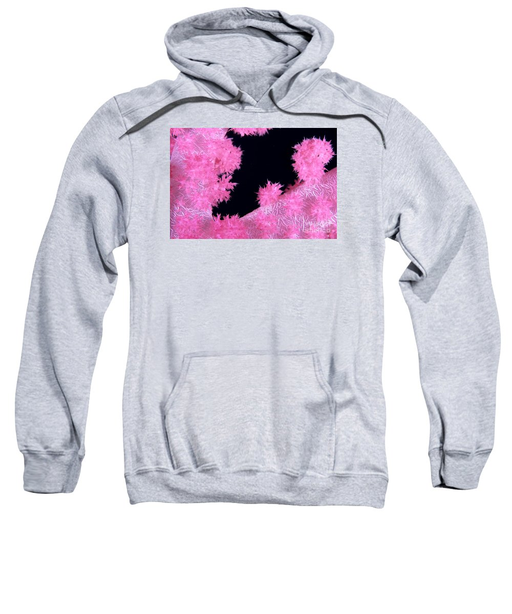 Alcyonarian Sweatshirt featuring the photograph Alcyonarian Coral by Dave Fleetham - Printscapes
