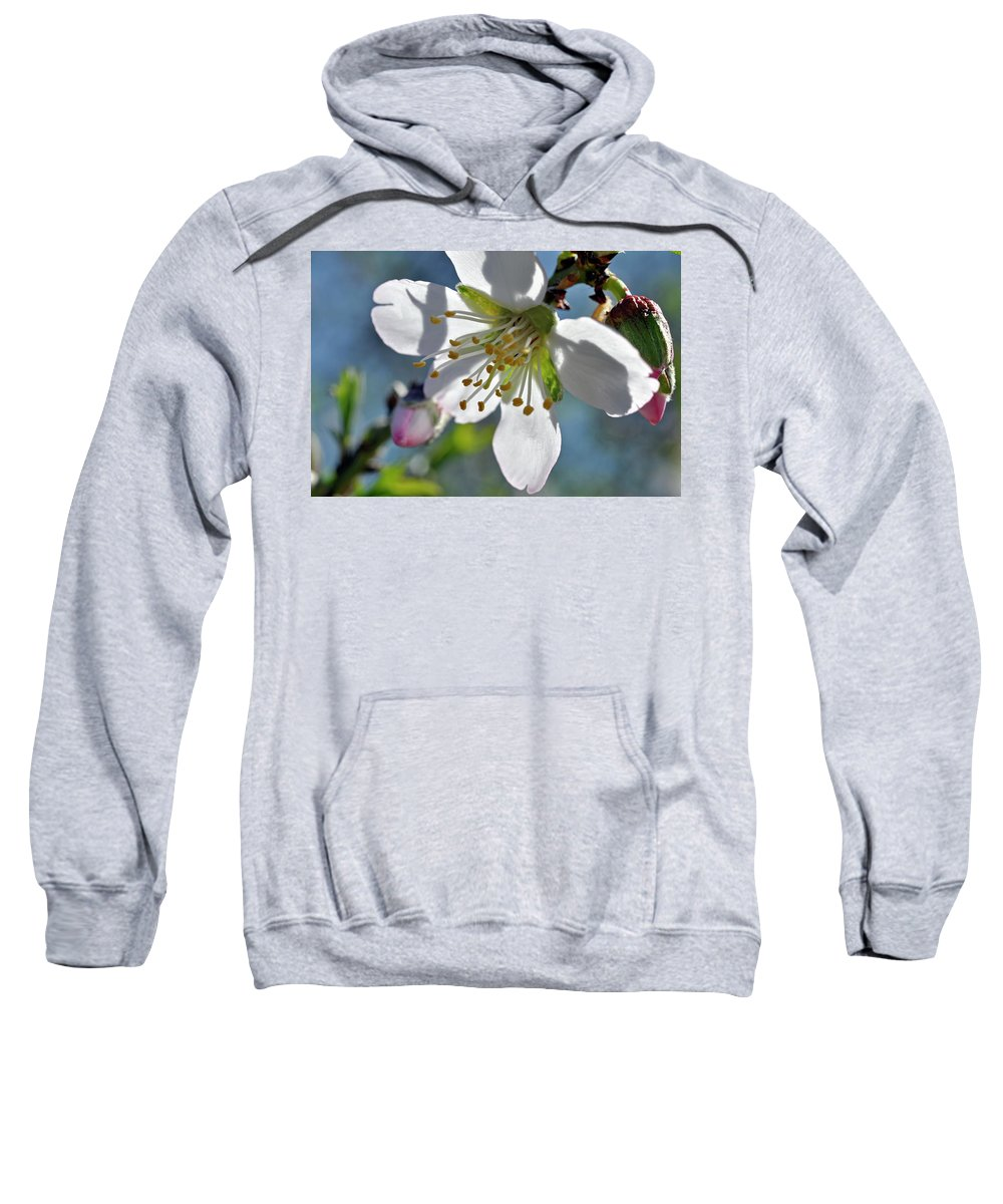 Almonds In Lachish 1 Sweatshirt featuring the photograph Almonds In Lachish 1 by Dubi Roman