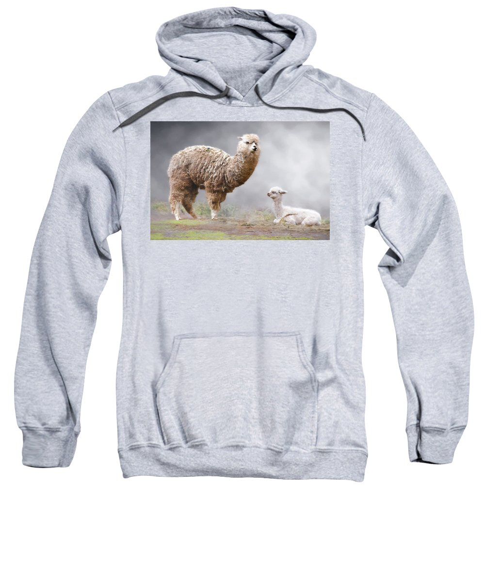 Peru Sweatshirt featuring the photograph Alpacas Mum And Baby by Claude LeTien