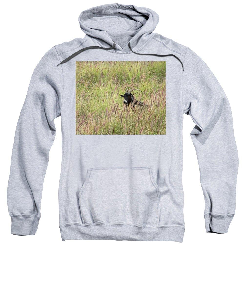 Pamela Walton Sweatshirt featuring the photograph Always Watching by Pamela Walton