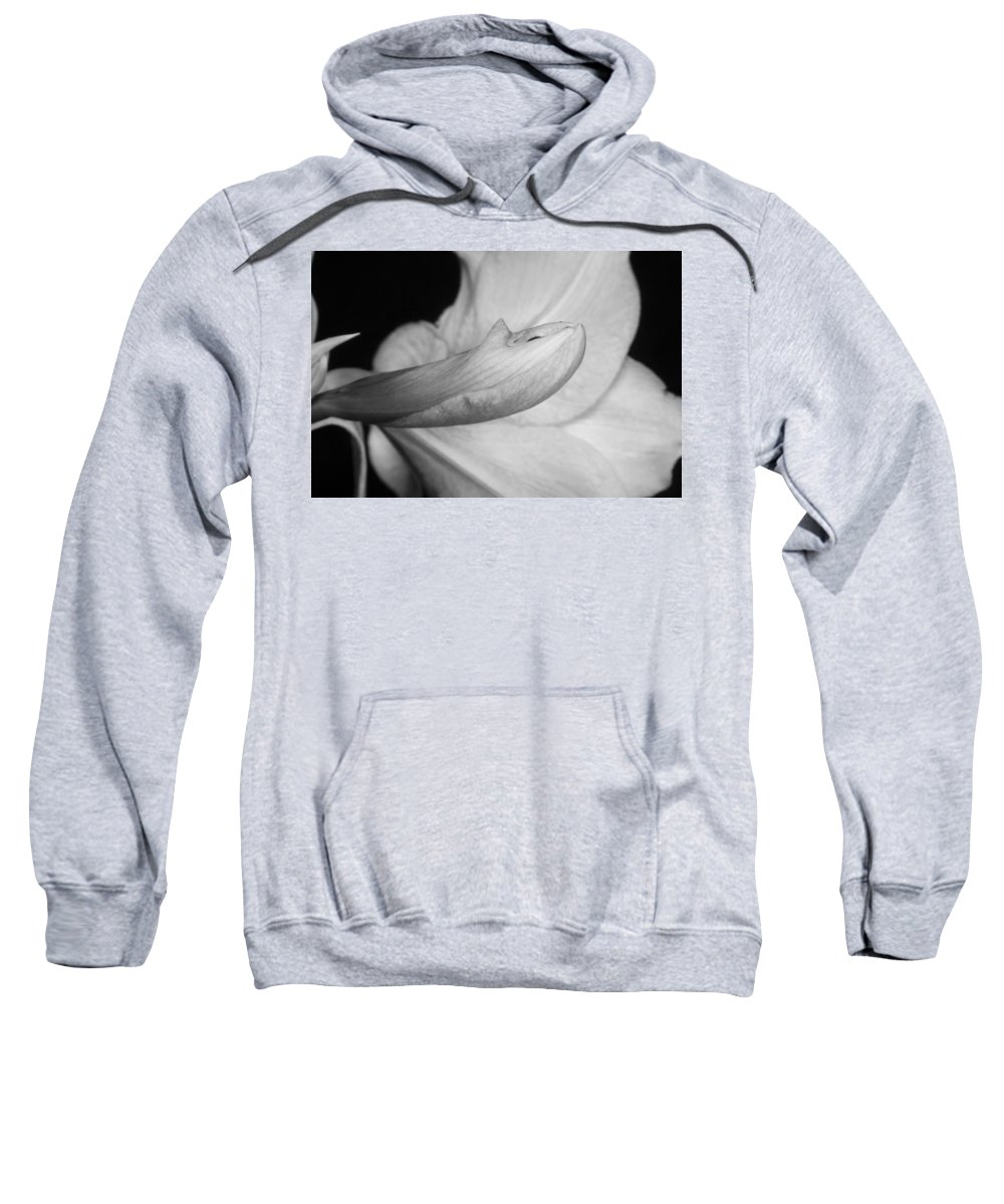 Amaryllis Sweatshirt featuring the photograph Amaryllis Flower About To Bloom In Black And White by James BO Insogna