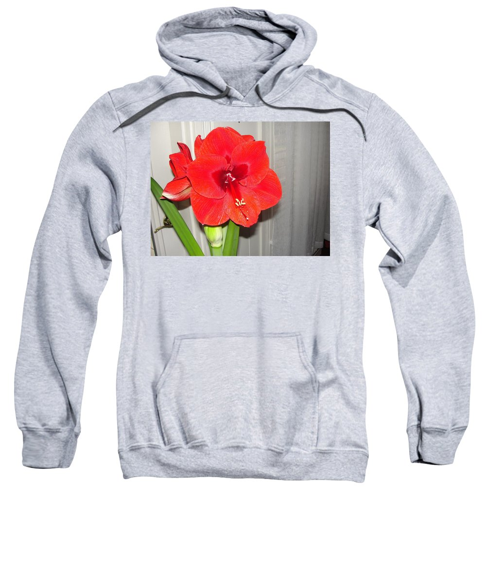 A Very Rewarding Houseplant. Sweatshirt featuring the photograph Amaryllis by Patricia Hart