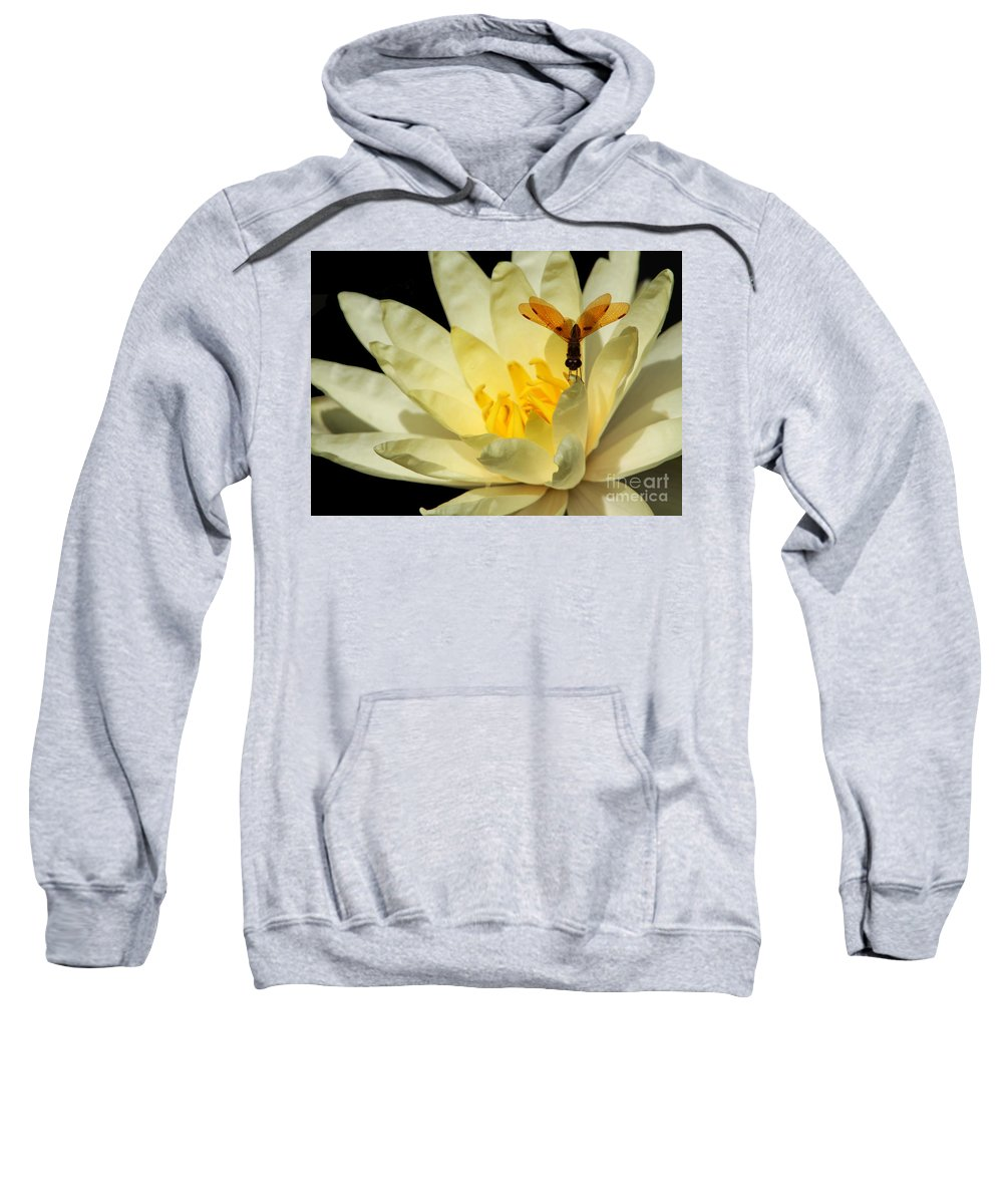 Dragonfly Sweatshirt featuring the photograph Amber Dragonfly Dancer Too by Sabrina L Ryan