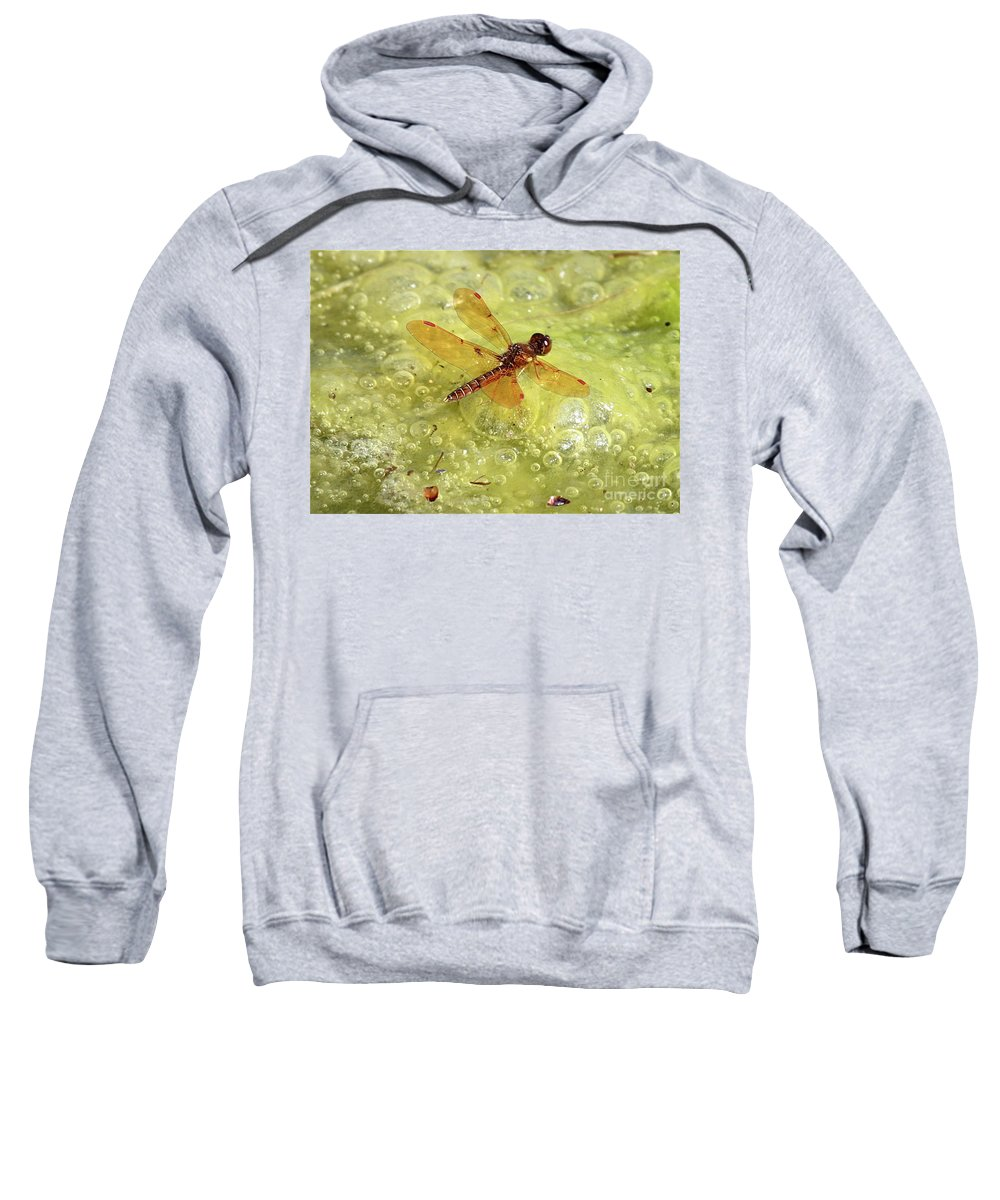 Dragonfly Sweatshirt featuring the photograph Amber Dragonfly On The Pond by Carol Groenen