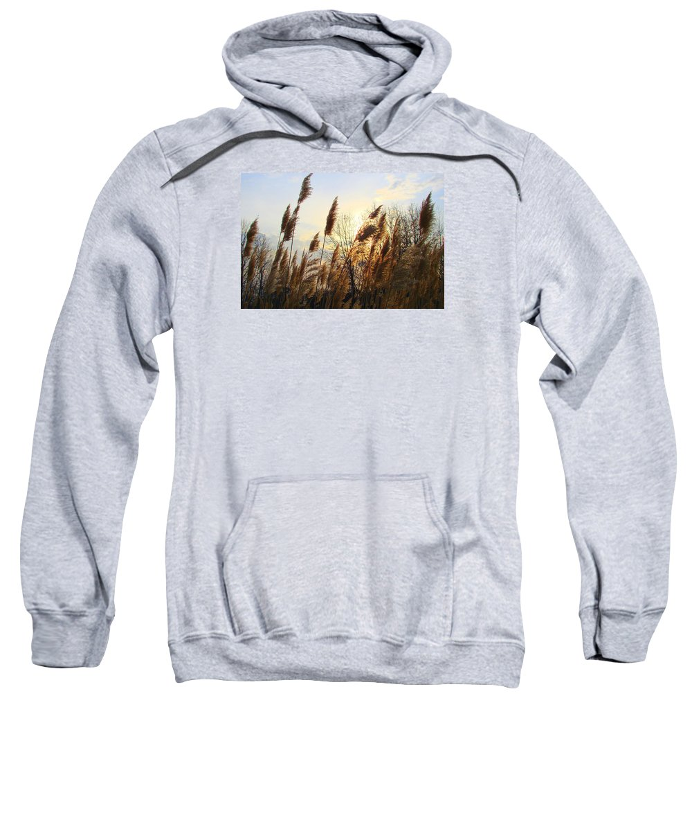 Pampasgrass Sweatshirt featuring the photograph Amber Waves Of Pampas Grass by J R Seymour