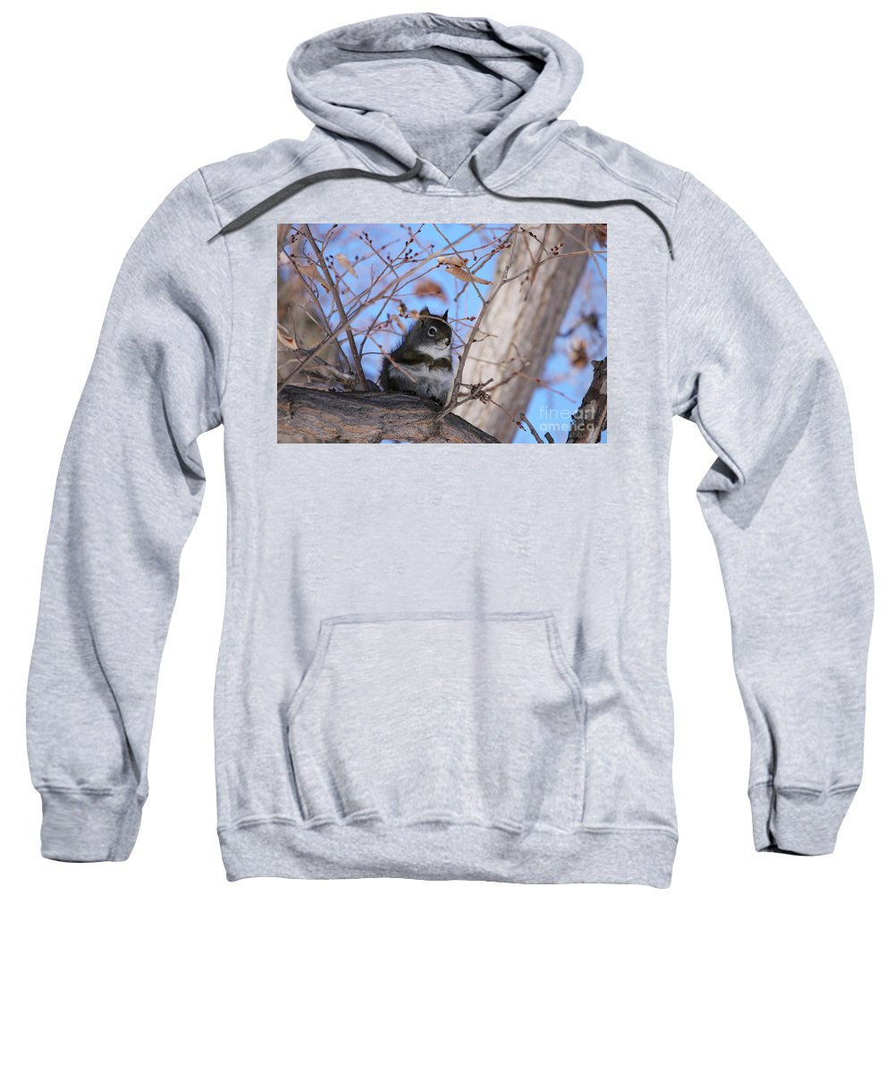 American Red Squirrel Sweatshirt featuring the photograph American Red Squirrel by Alyce Taylor