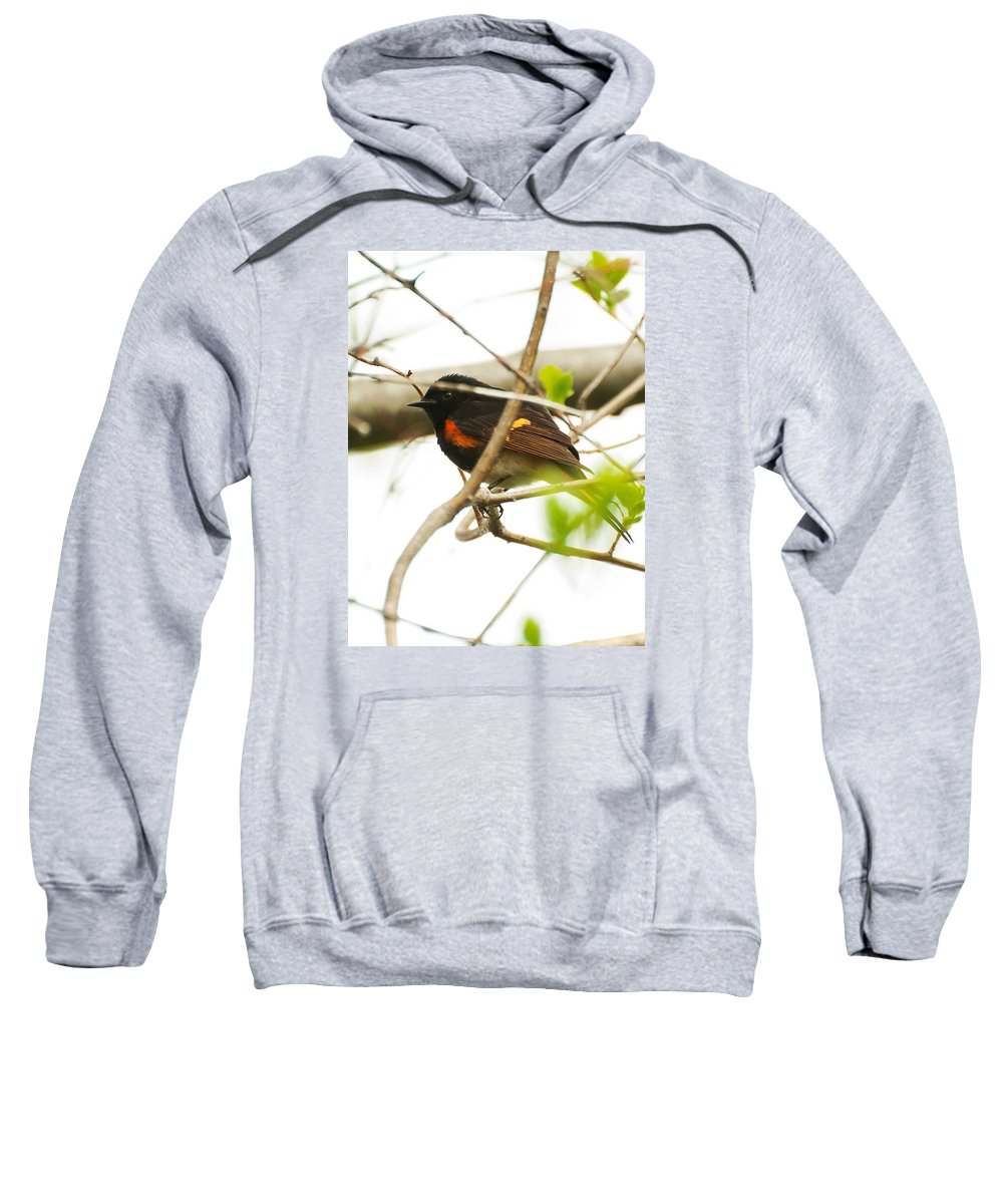 Sweatshirt featuring the photograph American Redstart 01 by Robert Hayes