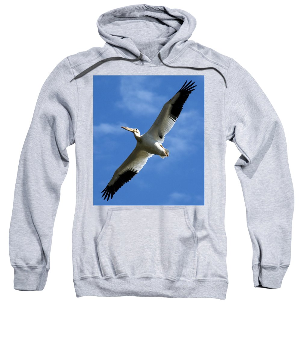 Bird Sweatshirt featuring the photograph American White Pelican Wings by Marilyn Hunt