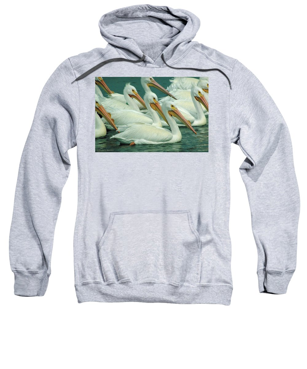 White Pelicans Sweatshirt featuring the photograph American White Pelicans by Bruce Morrison
