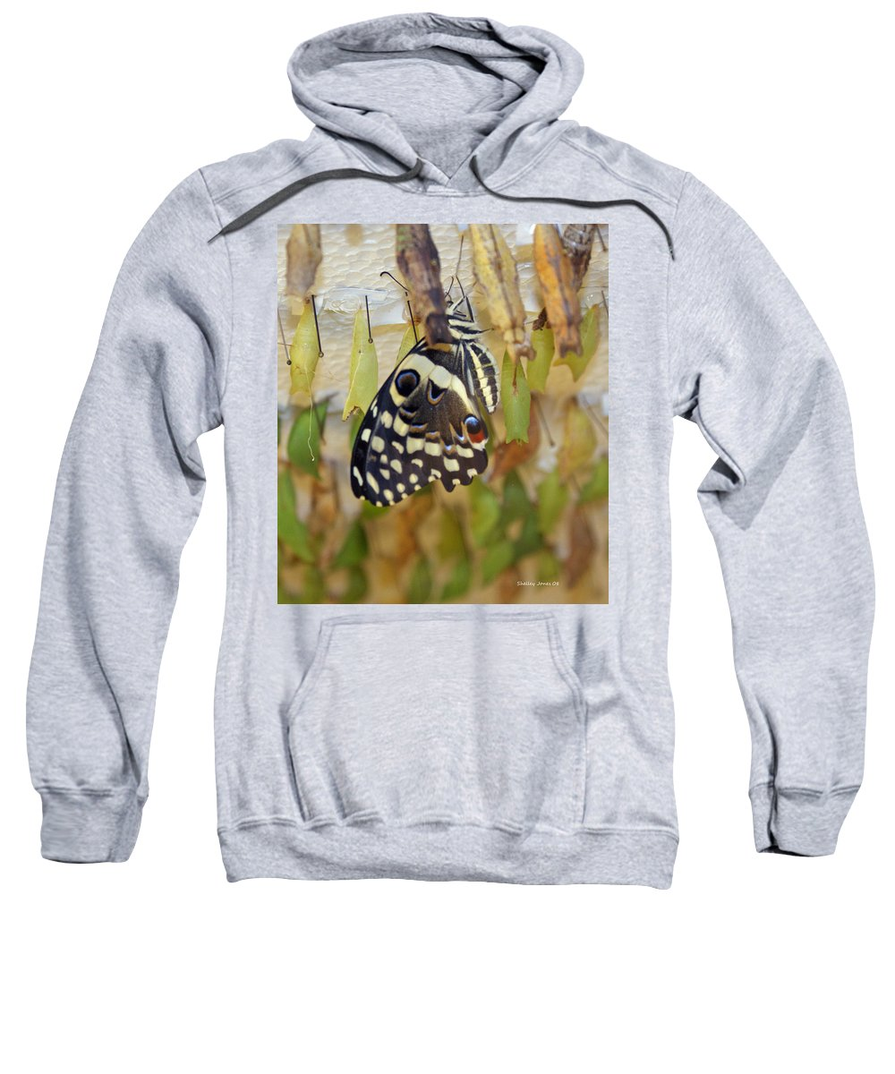 Butterfly Sweatshirt featuring the photograph And Life Begins by Shelley Jones