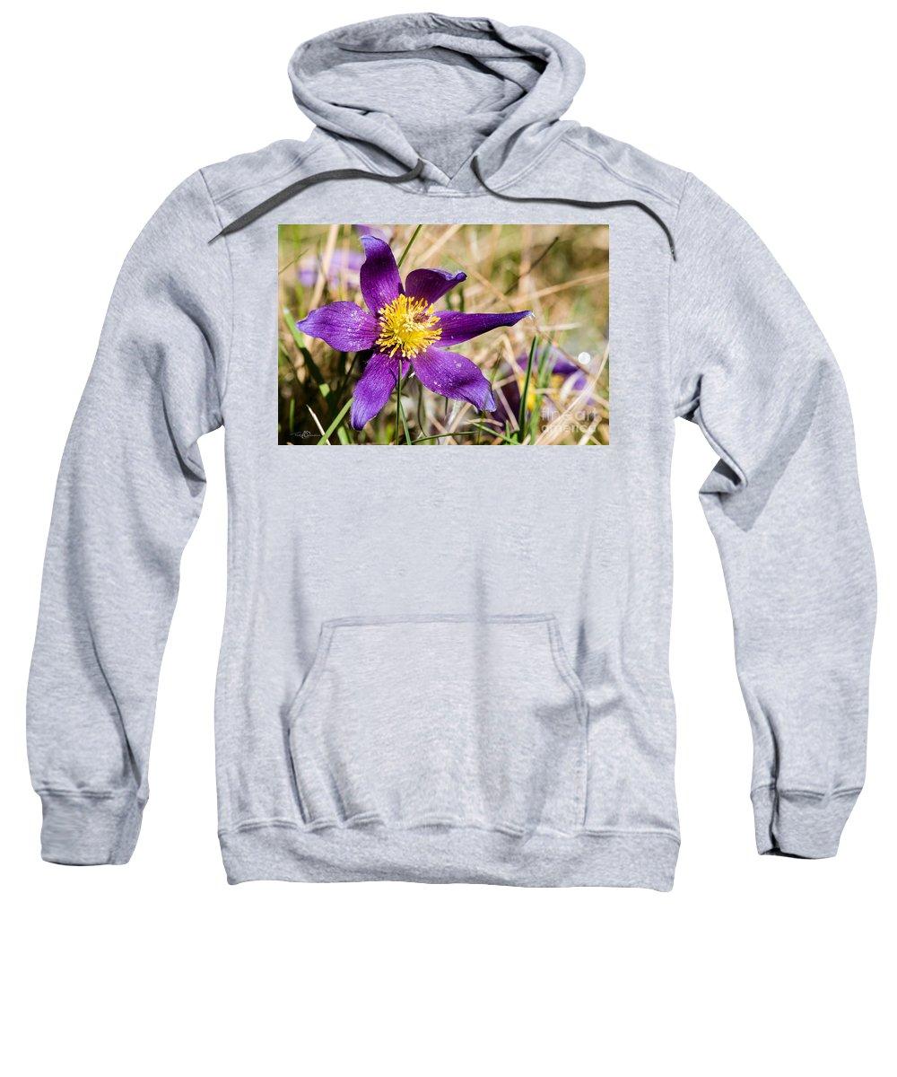 Anemone Pulsatilla Sweatshirt featuring the photograph Anemone Pulsatilla by Torbjorn Swenelius