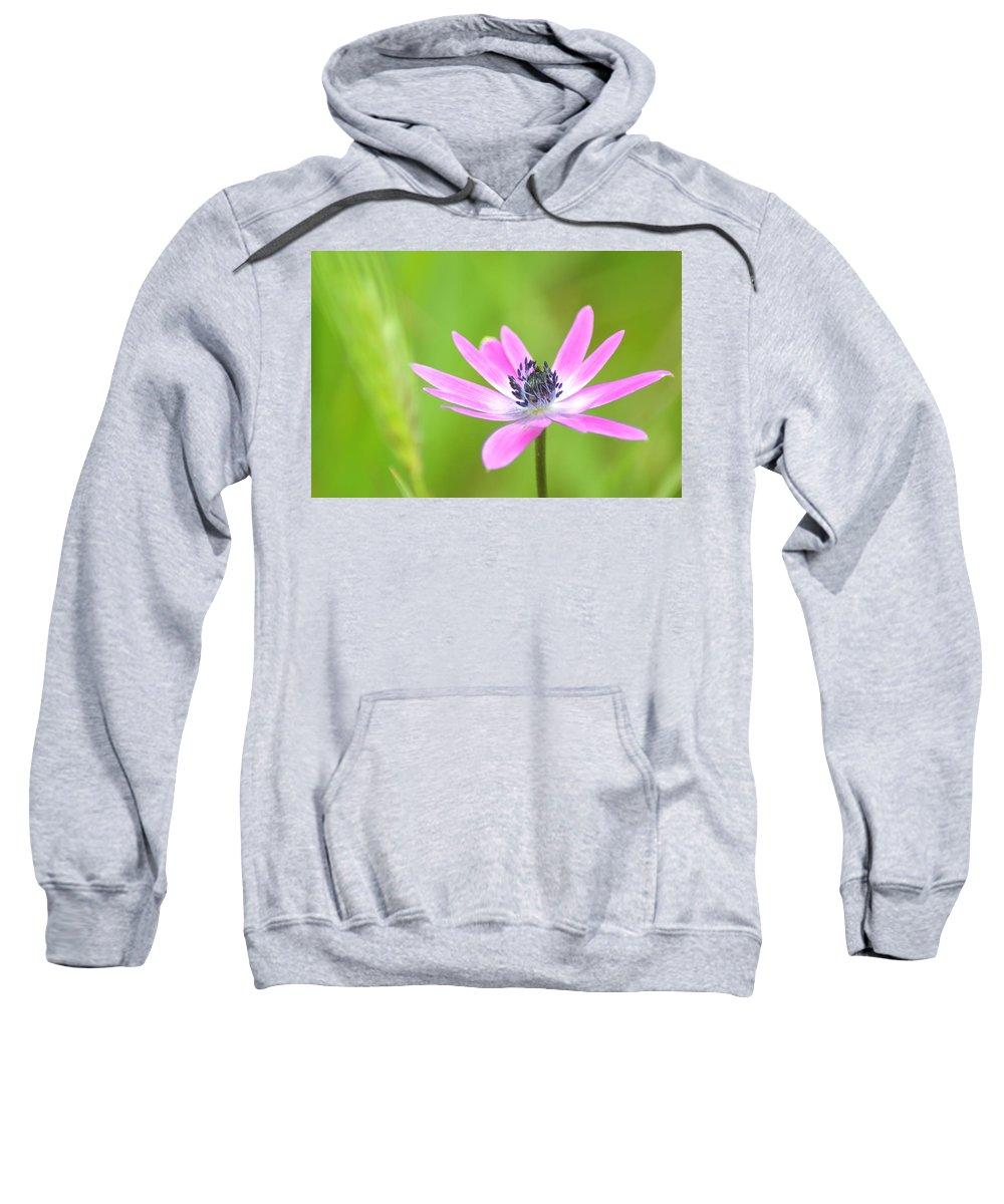 Natura Sweatshirt featuring the photograph Anemone Stellata by Orazio Puccio