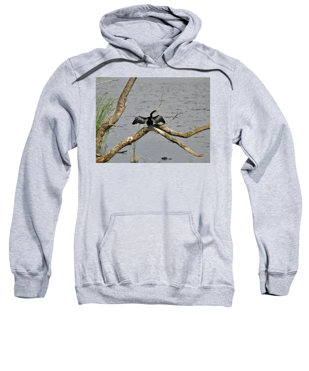 Anhinga Sweatshirt featuring the photograph Anhinga And Alligator by Al Powell Photography USA