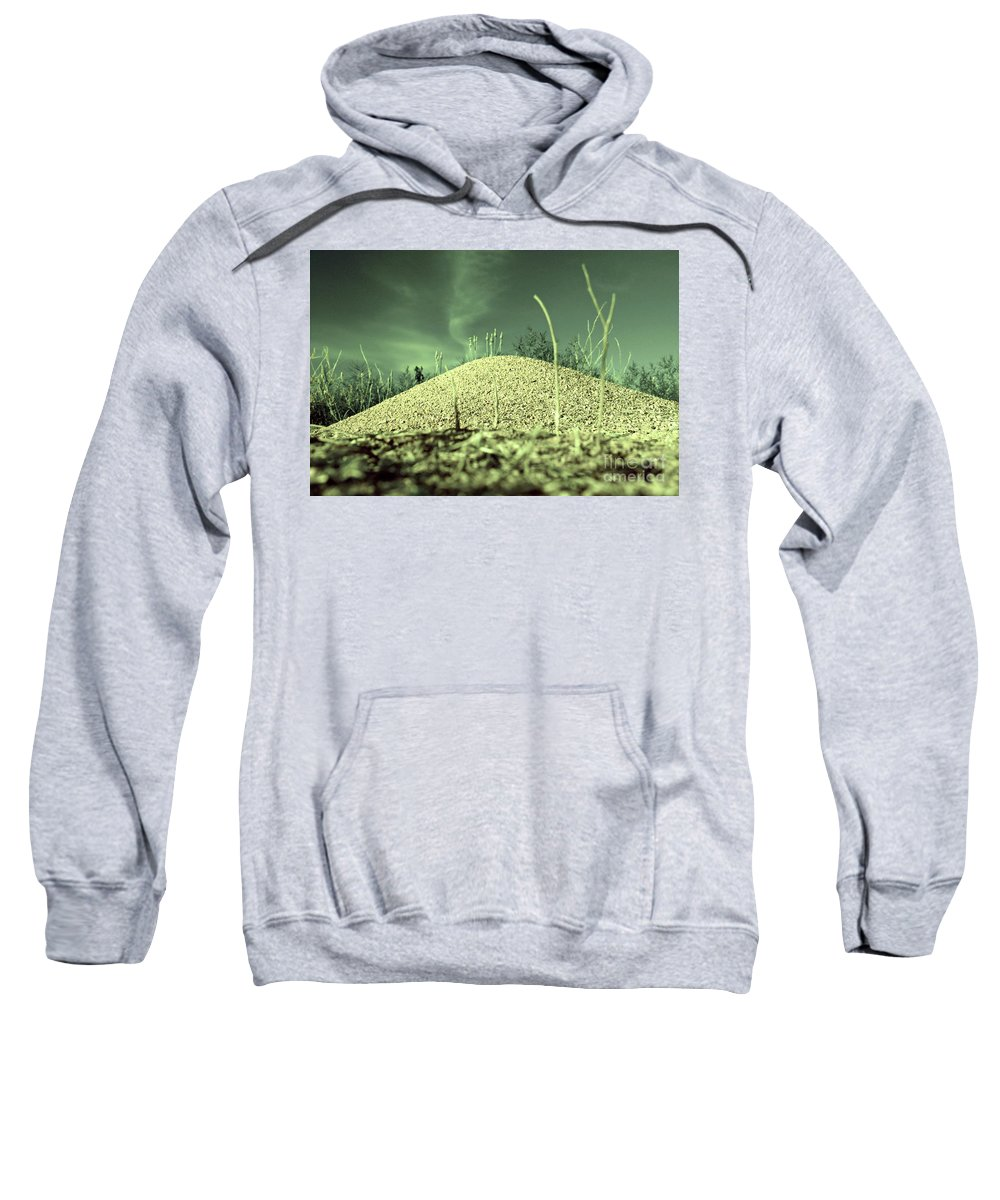 Digital Altered Photo Sweatshirt featuring the photograph Ant Returns Home After A Long Day by Tim Richards