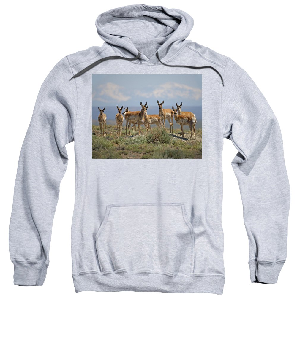 Antelope Sweatshirt featuring the photograph Antelope by Heather Coen