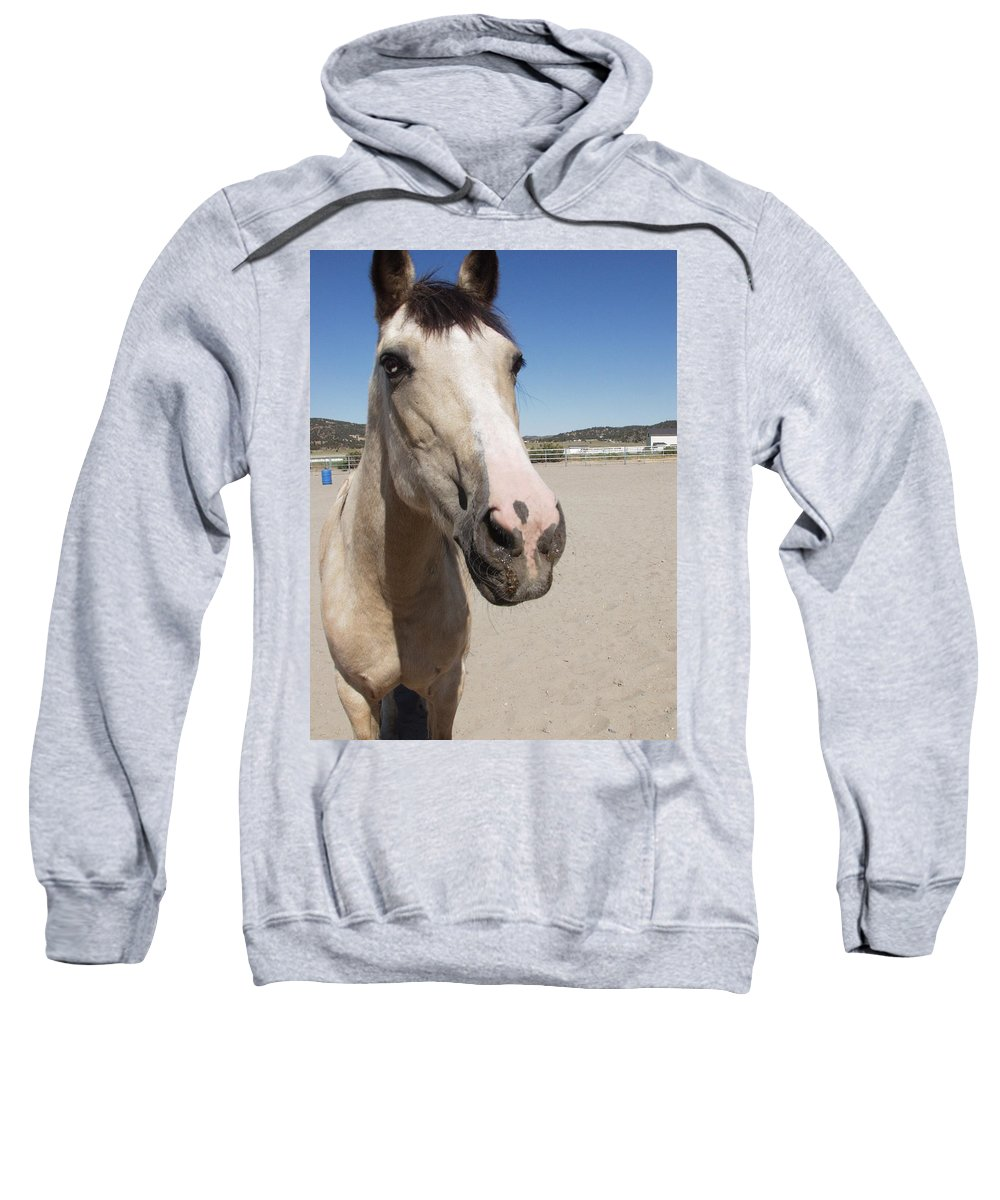 Horses Sweatshirt featuring the photograph Any Carrots by Jamey Balester