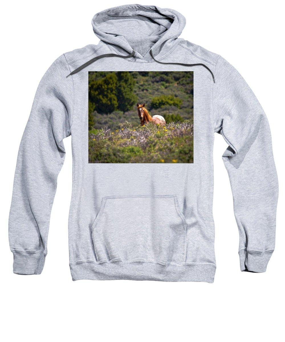 Horse Sweatshirt featuring the photograph Appaloosa Mustang Horse by Waterdancer