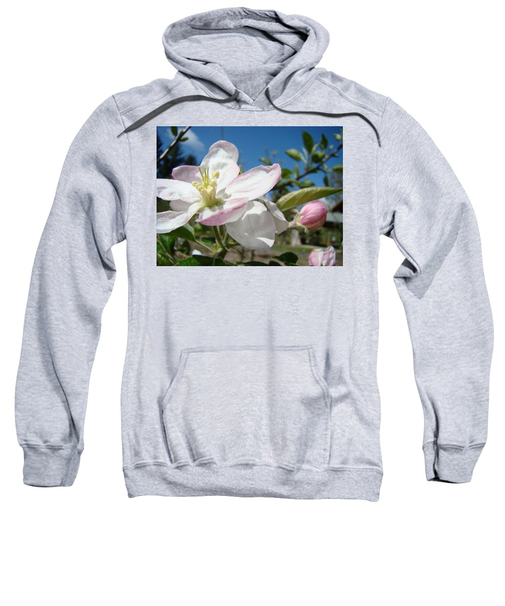 Apple Sweatshirt featuring the photograph Apple Blossoms Art Prints Canvas Blue Sky Pink White Blossoms by Baslee Troutman