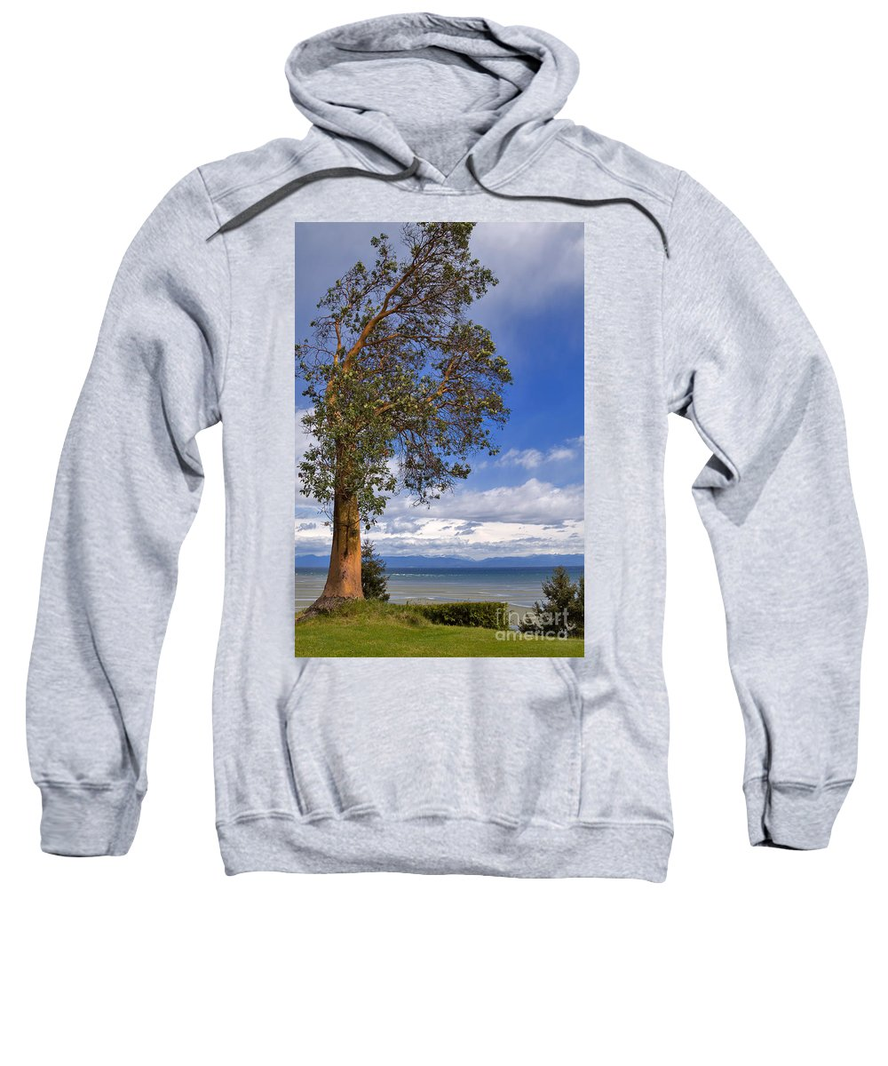 Tree Sweatshirt featuring the photograph Arbutus Tree At Rathtrevor Beach British Columbia by Louise Heusinkveld