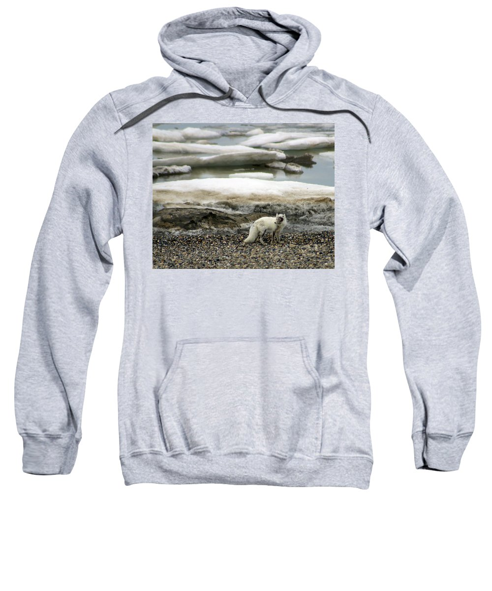 Fox Sweatshirt featuring the photograph Arctic Fox By Frozen Ocean by Anthony Jones