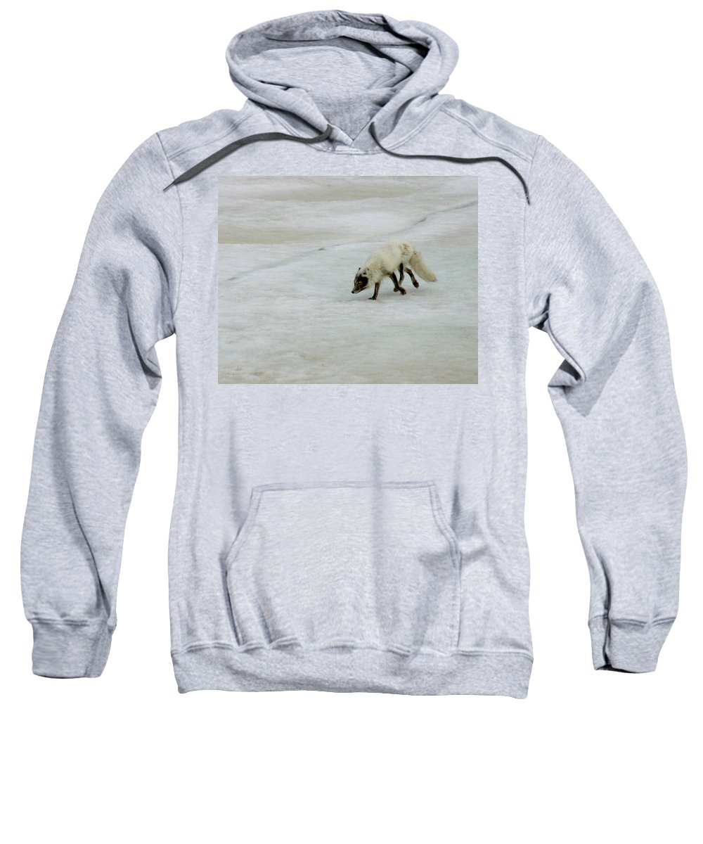 Arctic Fox Sweatshirt featuring the photograph Arctic Fox On Ice by Anthony Jones