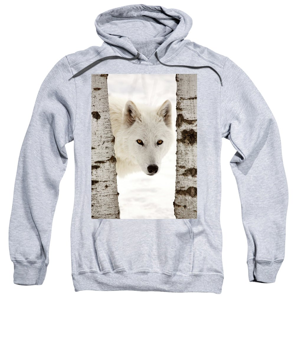Arctic Wolf Sweatshirt featuring the digital art Arctic Wolf Seen Between Two Trees In Winter by Mark Duffy