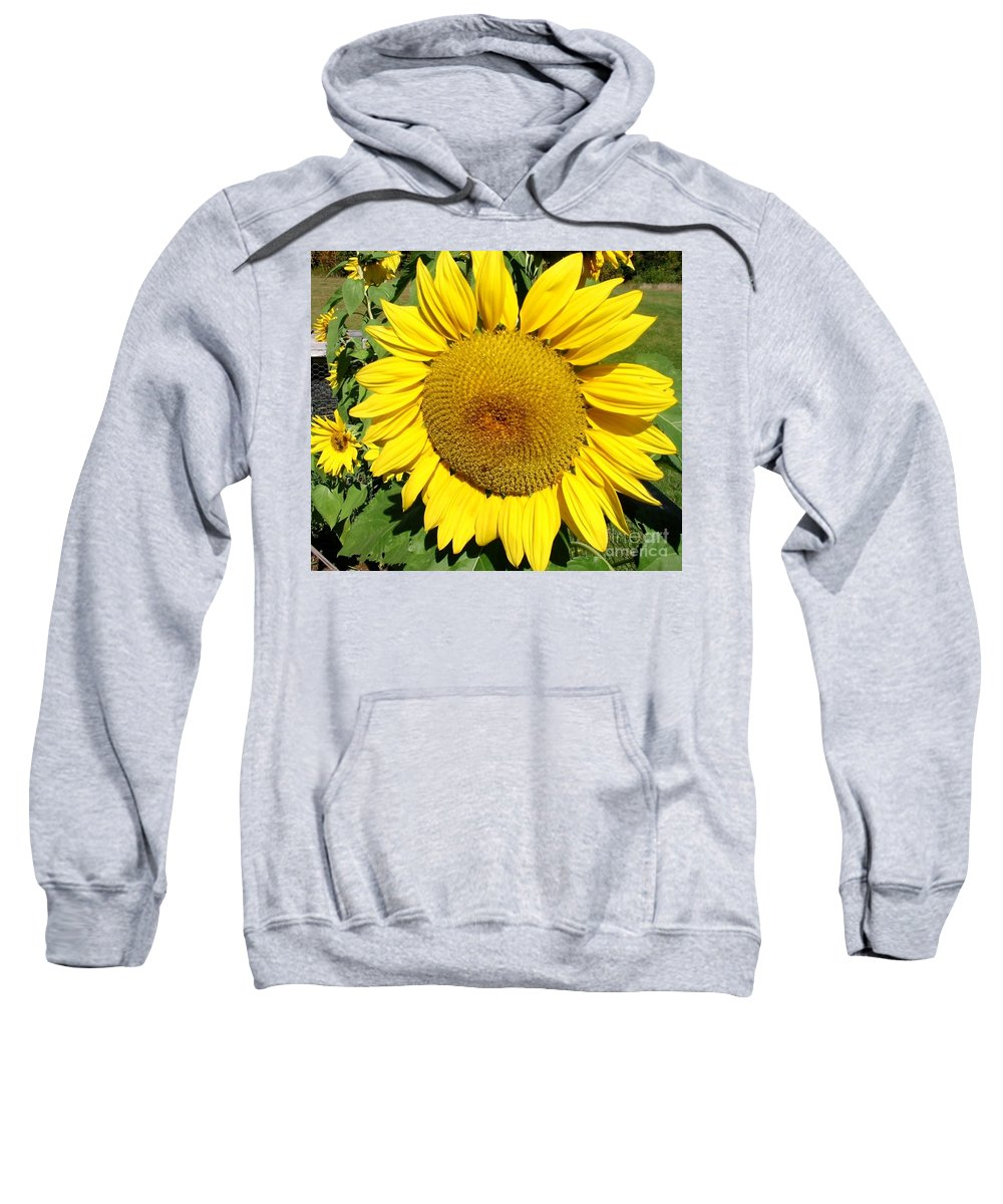 Sun Sweatshirt featuring the photograph Arikara Sunflower by Karen Sloan