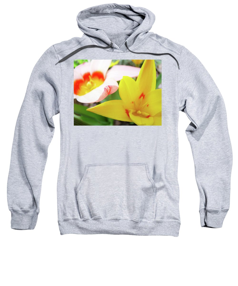 Tulip Sweatshirt featuring the photograph Art Prints Pink Tulip Yellow Tulips Giclee Prints Baslee Troutman by Baslee Troutman