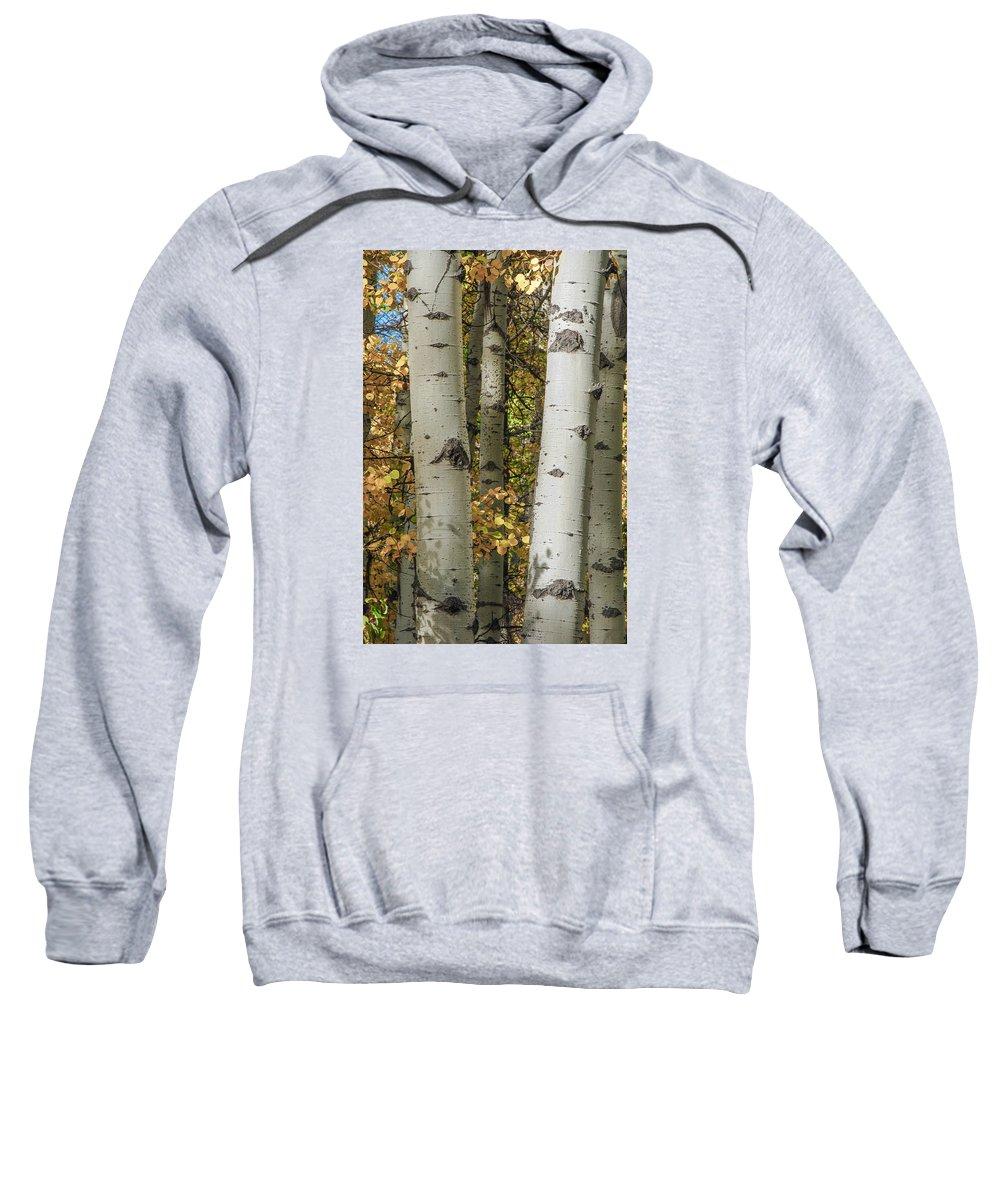 Aspens Sweatshirt featuring the photograph Aspen Bark by Megan Martens