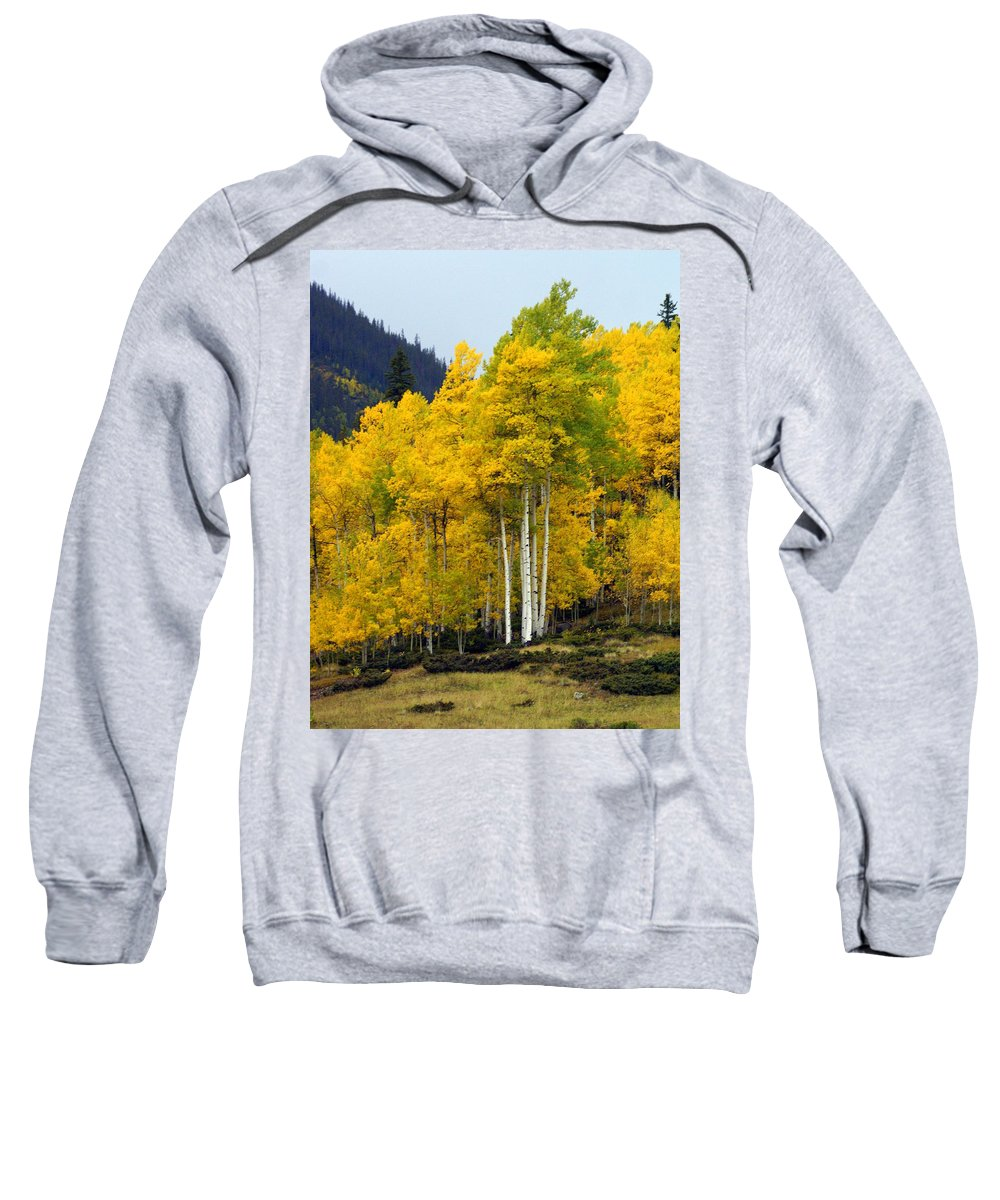 Fall Colors Sweatshirt featuring the photograph Aspen Fall 3 by Marty Koch