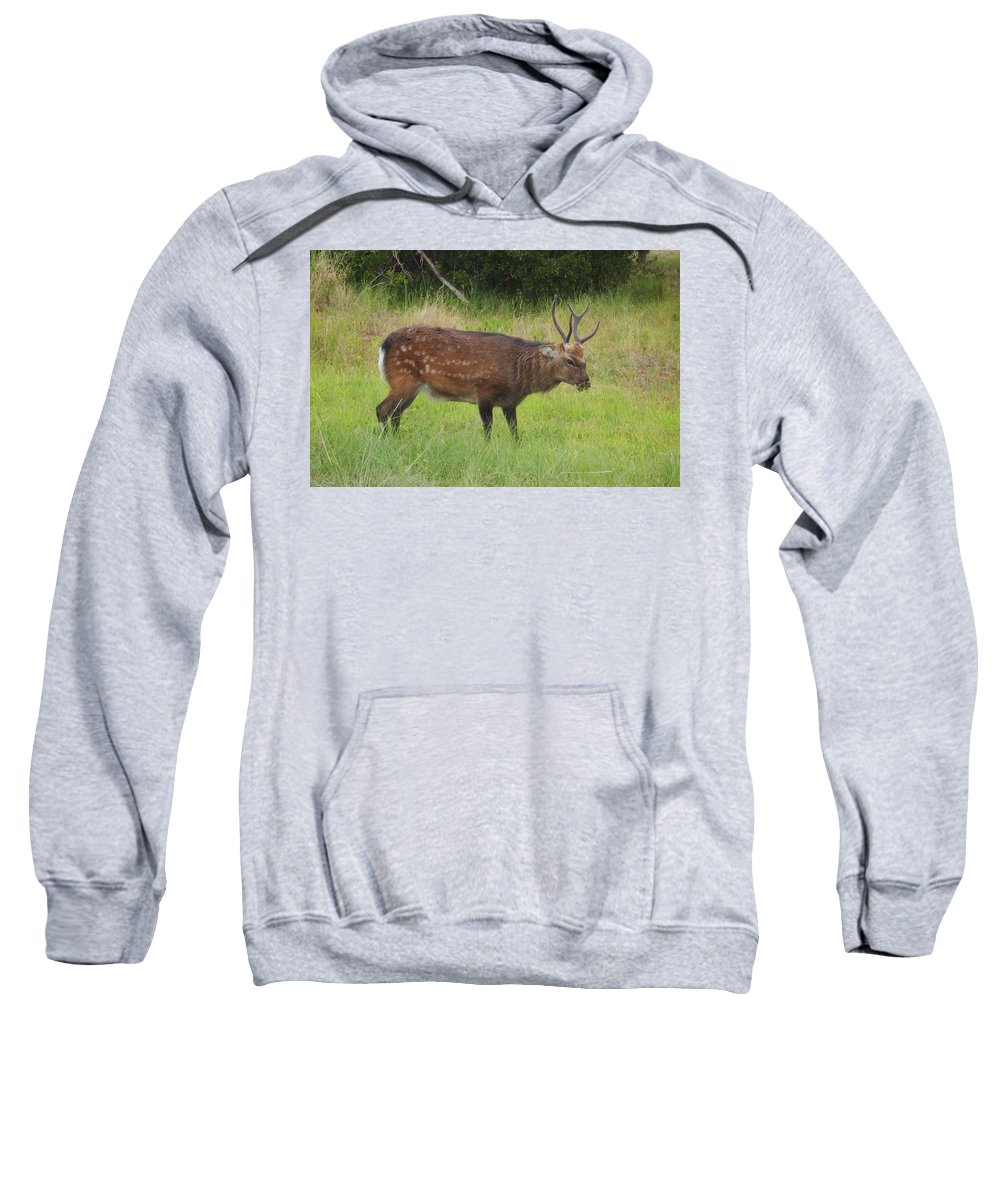 Assateague Island Sitka Deer Images Sitka Deer Prints Assateague Island Prints Assateague Island Wildlife Introduced Species Sweatshirt featuring the photograph Assateague Sitka Deer by Joshua Bales