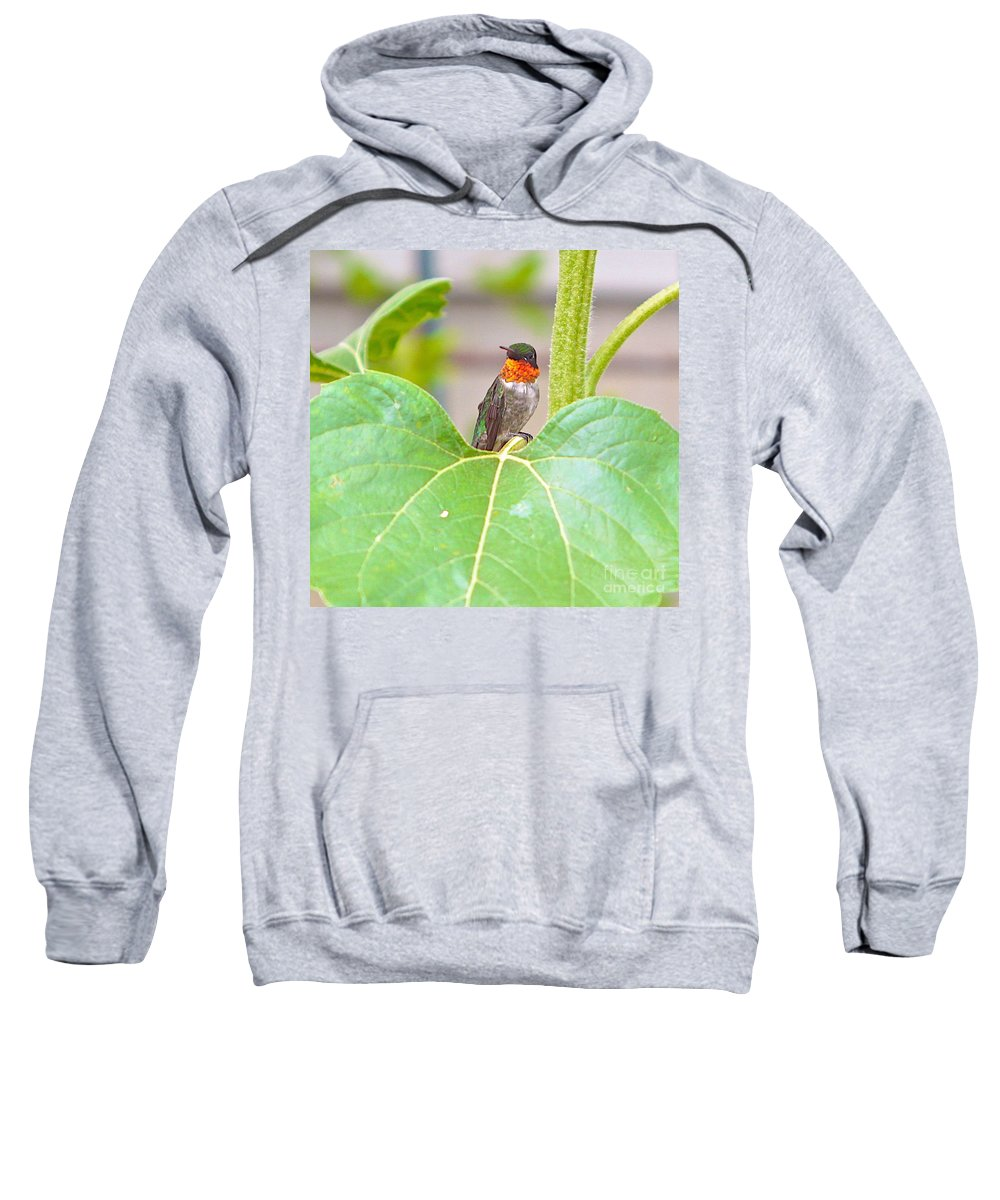 Humming Bird Sweatshirt featuring the photograph At Attention With Atitude by Robert Pearson