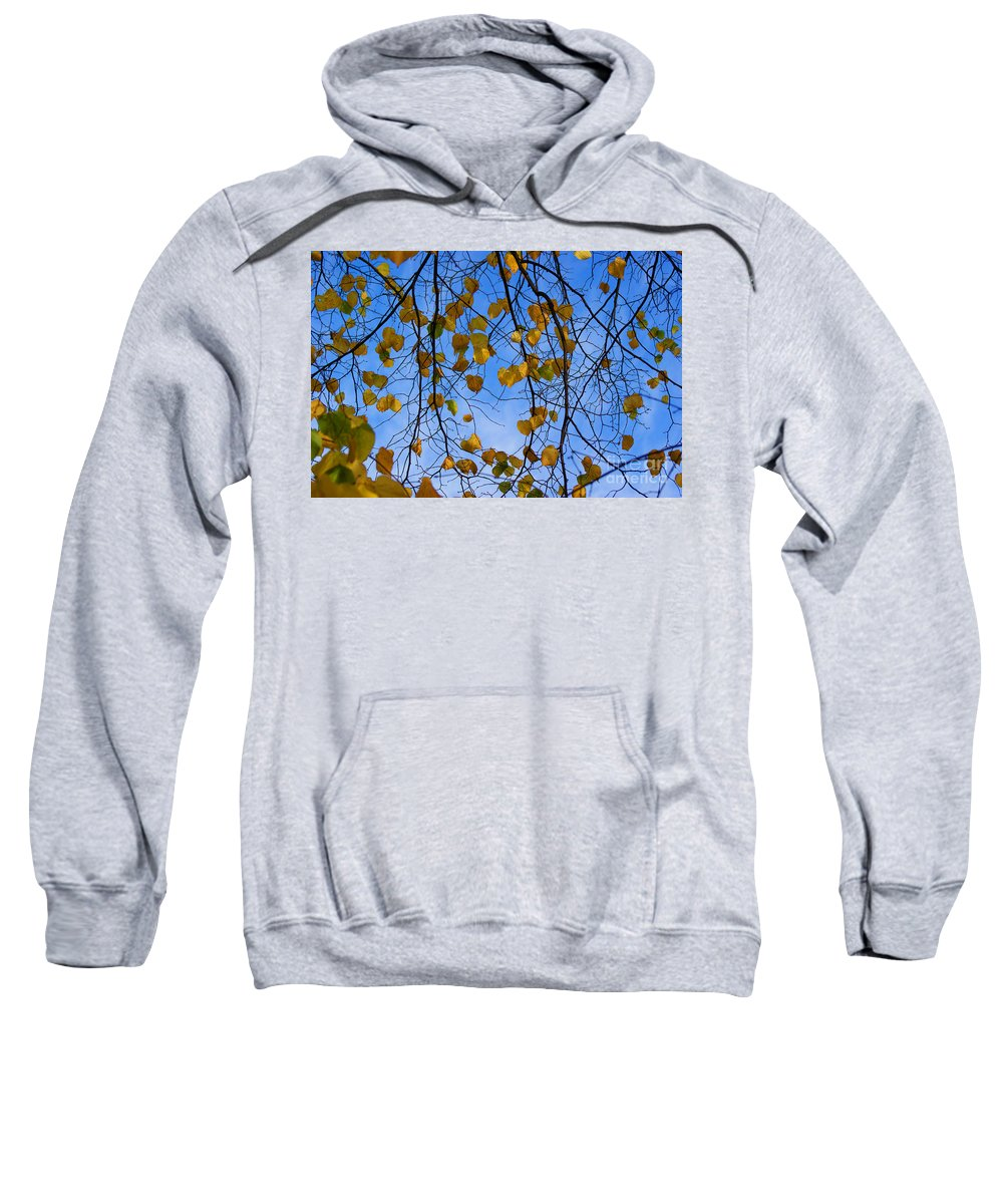 Autumn Sweatshirt featuring the photograph Autumn Leaves by Carol Lynch