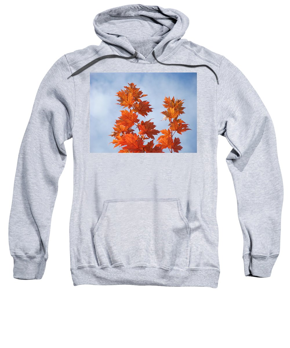 Autumn Sweatshirt featuring the photograph Autumn Tree Leaves Art Prints Blue Sky White Clouds by Baslee Troutman