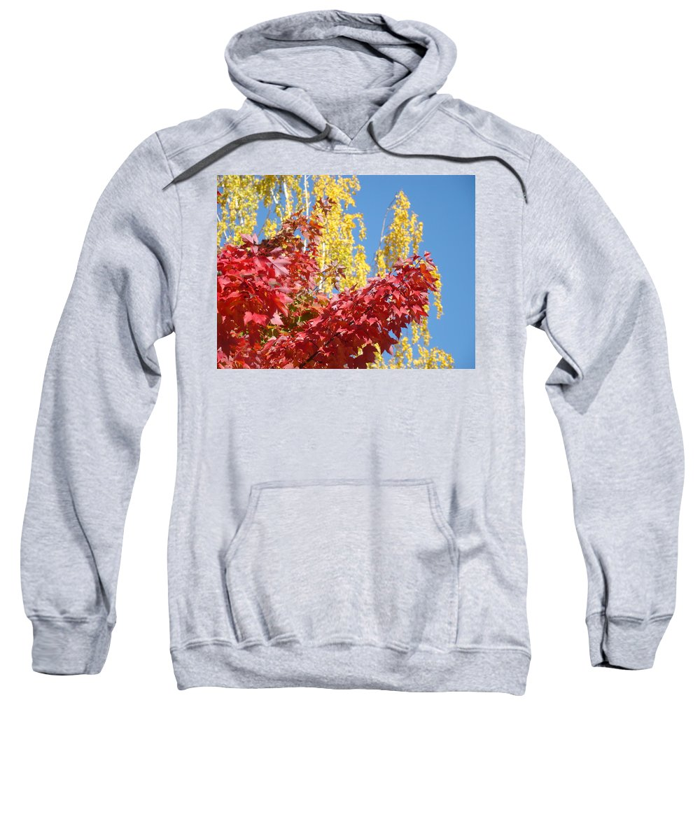 Autumn Sweatshirt featuring the photograph Autumn Trees Red Yellow Fall Tree Blue Sky Landsape by Baslee Troutman