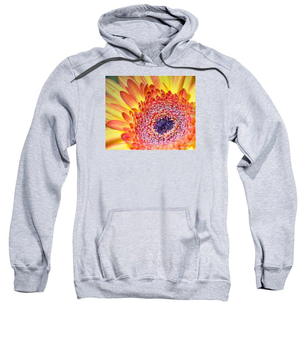 Autumn Sweatshirt featuring the photograph Autumn Yellow Flower by Gergana Chakalova