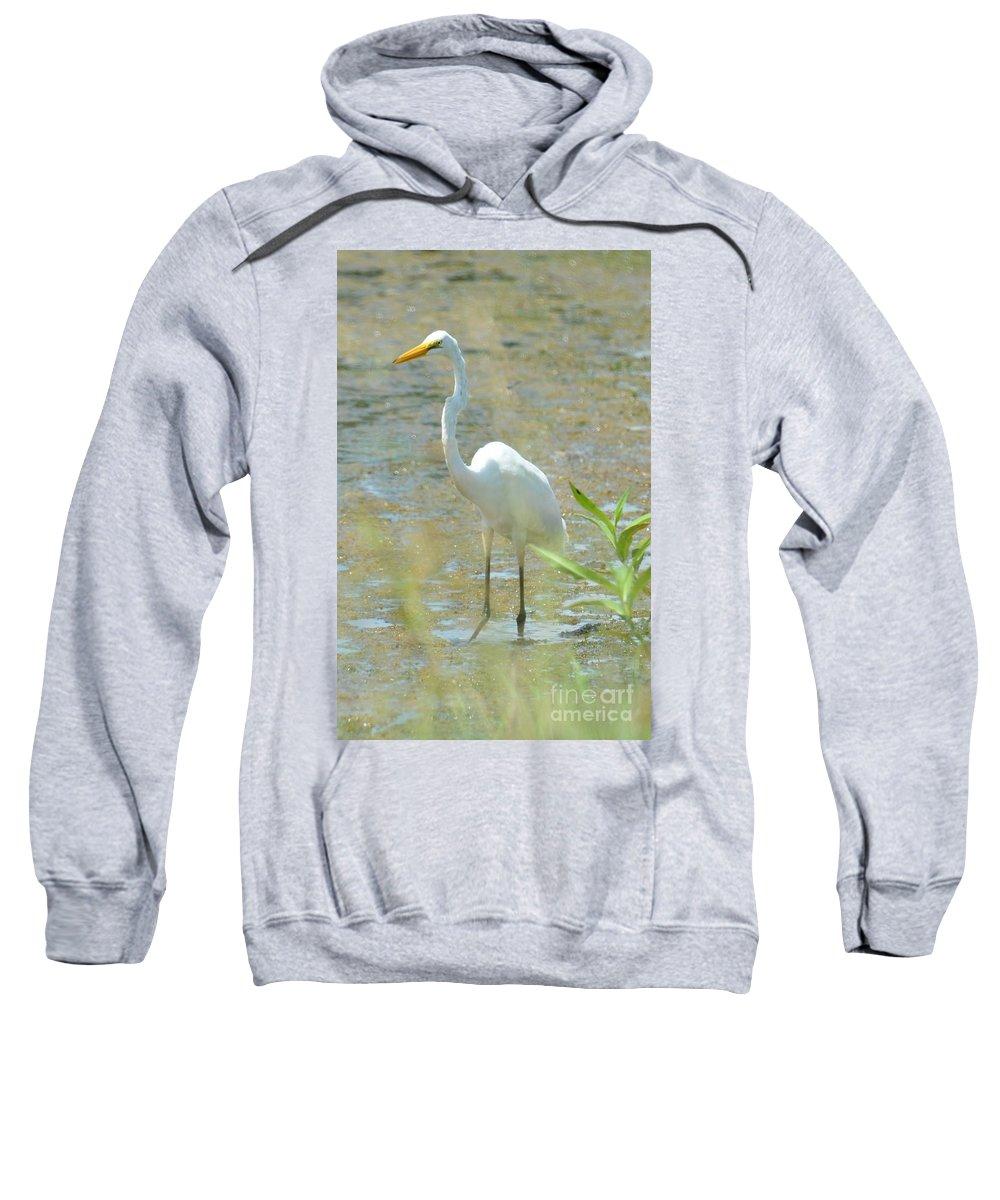 Autumn's Egret Sweatshirt featuring the photograph Autumn's Egret by Maria Urso