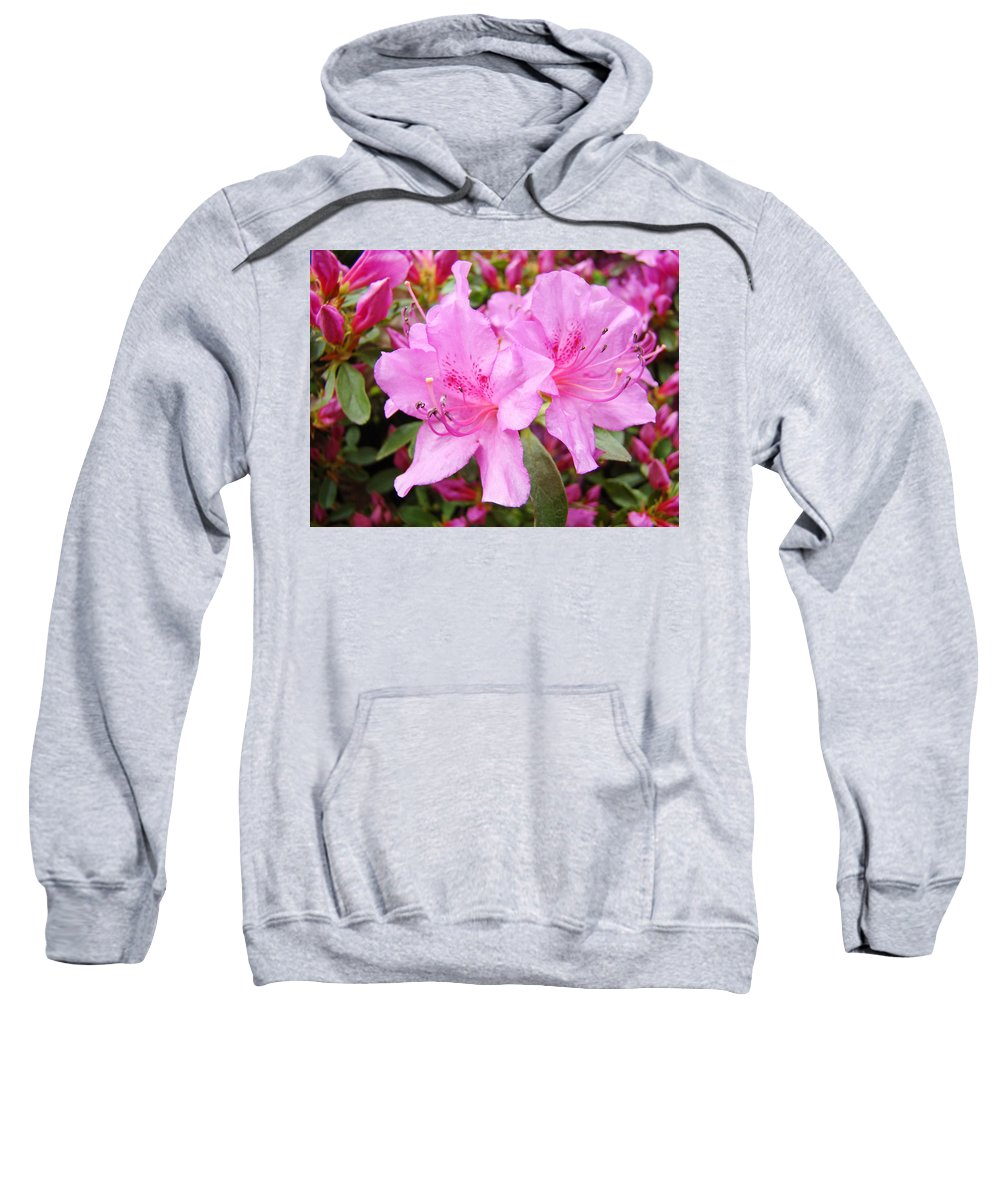 Azalea Sweatshirt featuring the photograph Azalea Garden Art Prints Pink Azaleas Flowers Baslee Troutman by Baslee Troutman