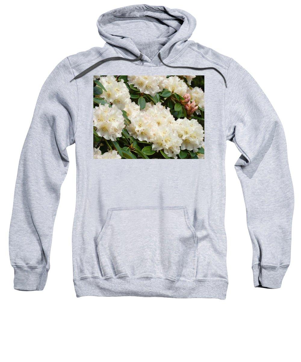 �azaleas Artwork� Sweatshirt featuring the photograph Azaleas Rhodies Landscape White Pink Rhododendrum Flowers 8 Giclee Art Prints Baslee Troutman by Baslee Troutman