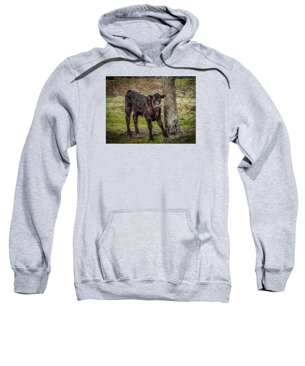 Sweatshirt featuring the photograph Baby Calf by Reed Tim