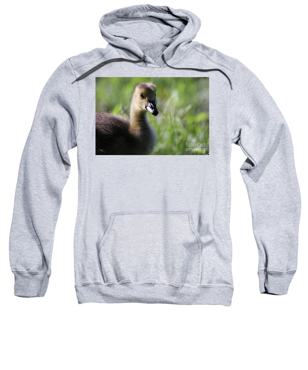 Canadian Geese Sweatshirt featuring the photograph Baby Canadian by Karol Livote